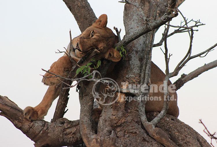 12 days uganda luxury safari