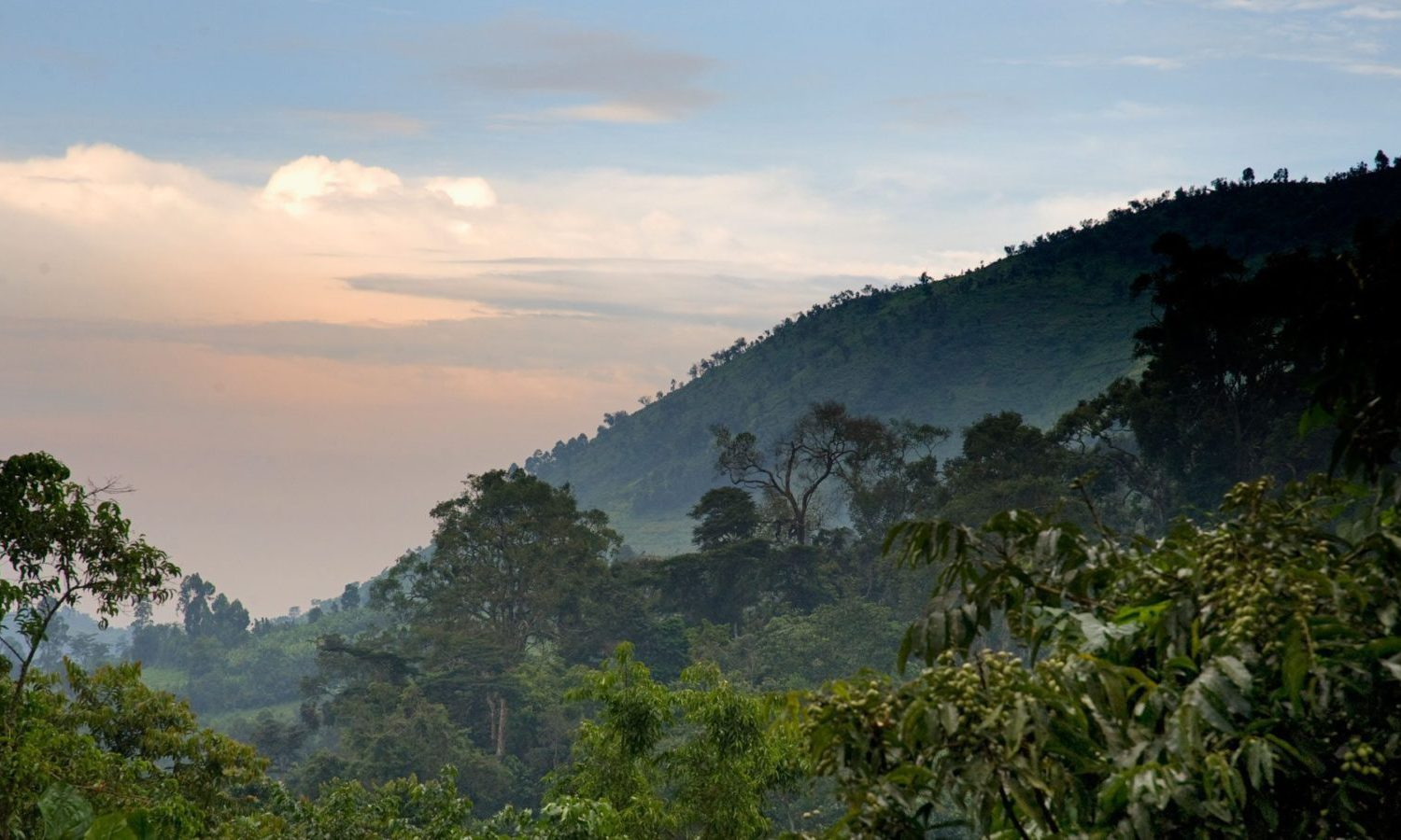 5 Days Bwindi Gorillas and Wildlife safari
