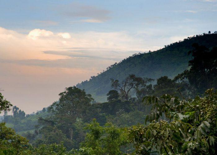 5 Days Bwindi Gorillas and Wildlife safari