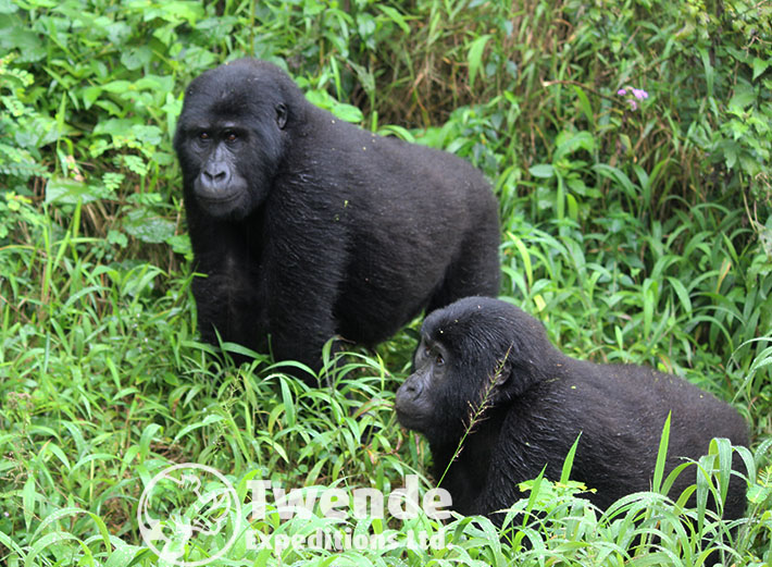 8 days Primates & Wildlife Safari