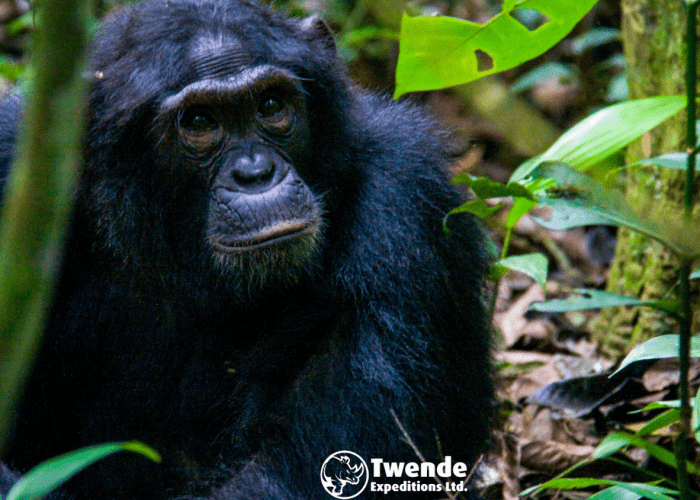 17-ays-uganda-adventure