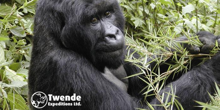 8 Days Rwanda, Uganda Canopy & primate safari