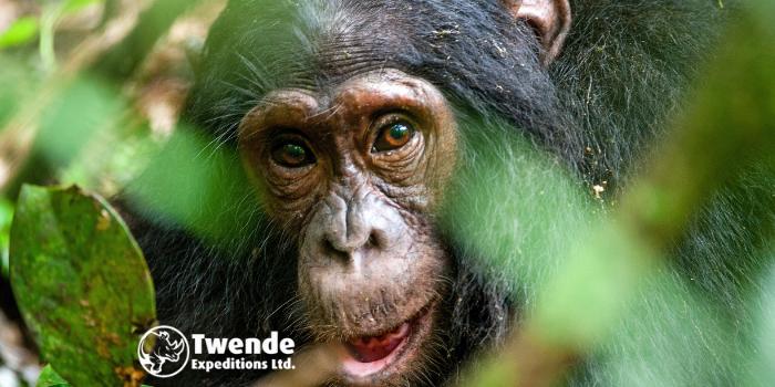 17 Days Uganda Adventure