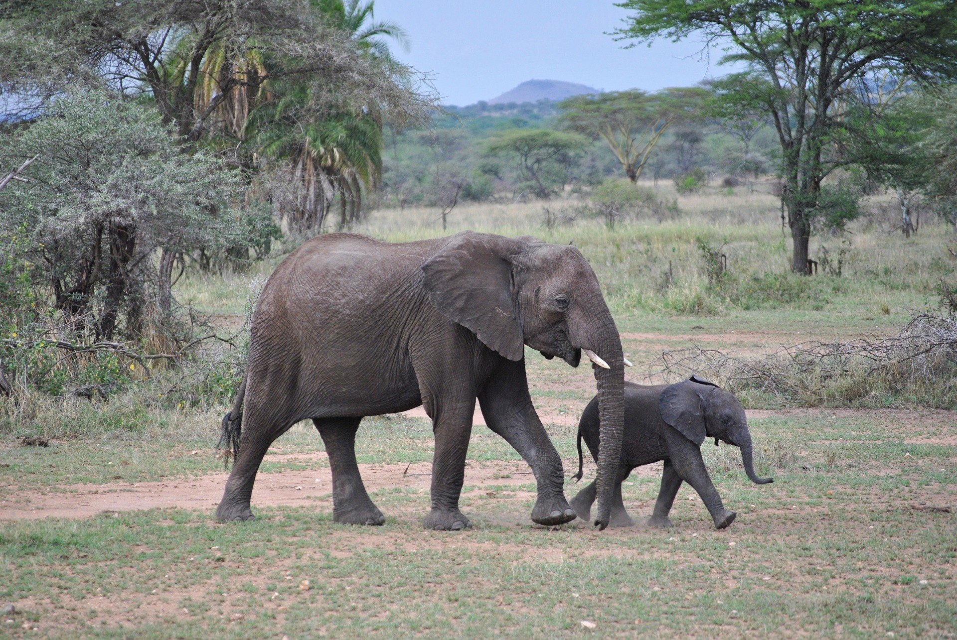 5-days-tanzania-safari