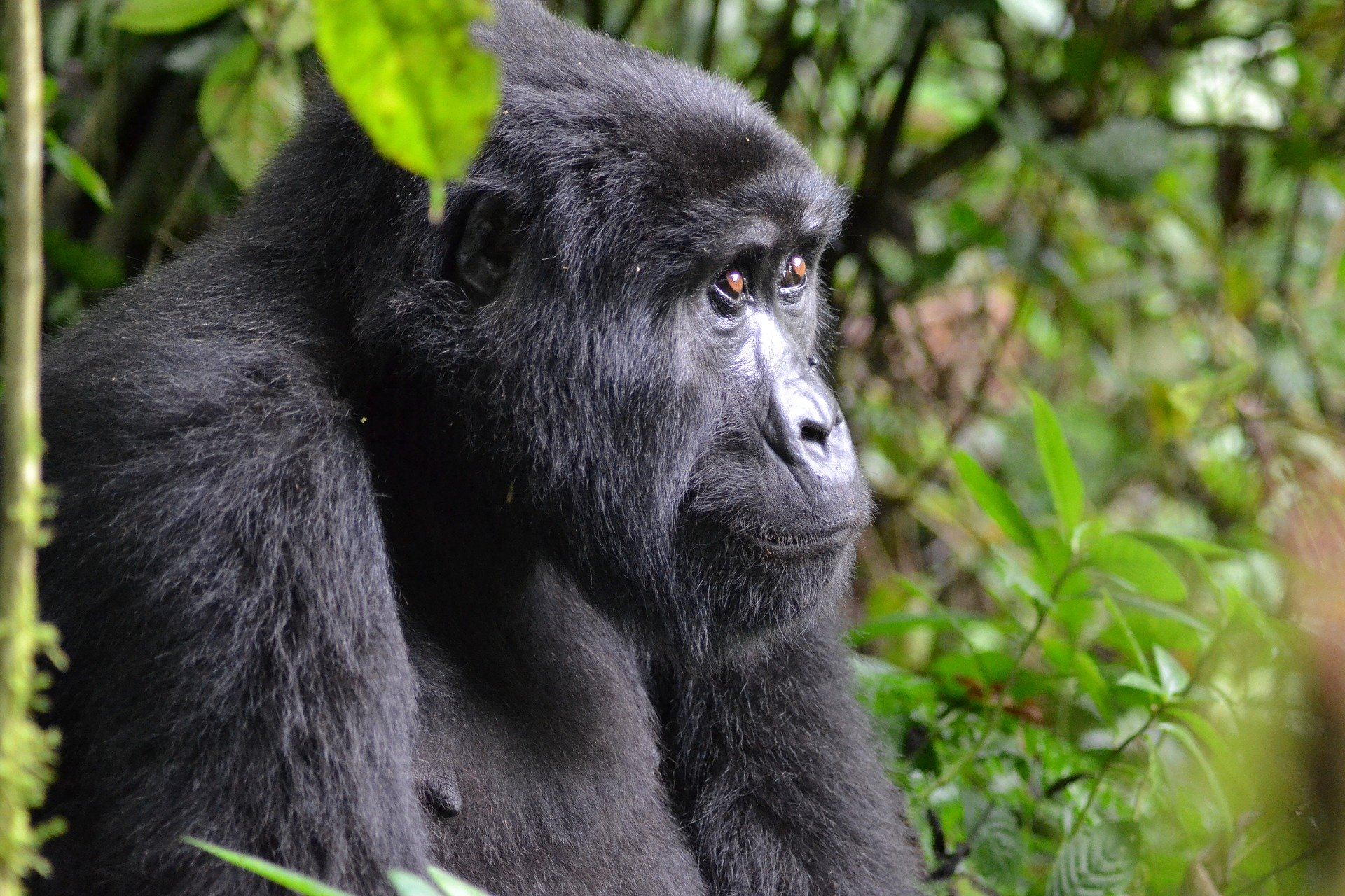 3-days-gorilla-safari