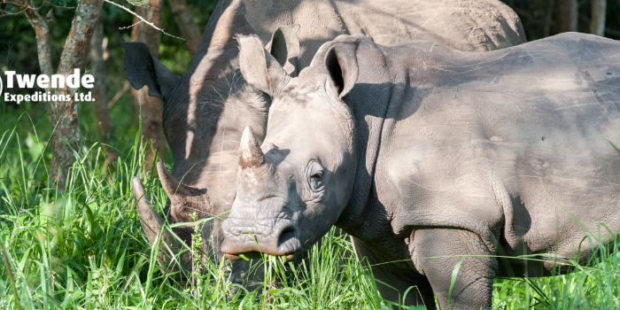 21 Days Uganda Safari-Gorillas, Chimpanzee, wildlife & adventure