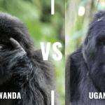 Gorilla trekking Uganda vs rwanda