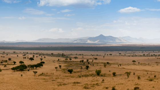 Kidepo National Park is a true example of african wilderness. It is known for game drives, nature and community walks,  mountain hiking and bird watching