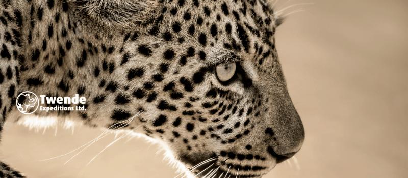 3-days-serengeti-national-park