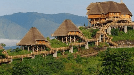 bwindi impenetrable mahogany springs